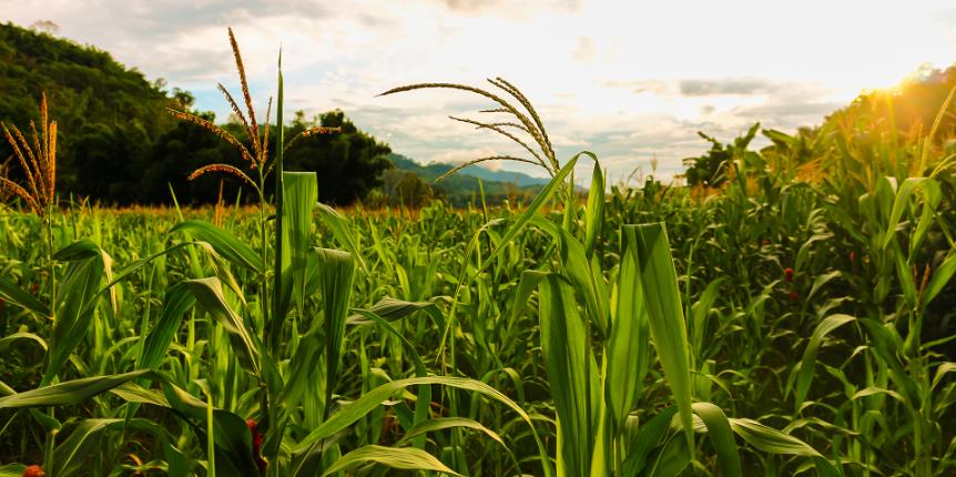 Agromercantil Corretora